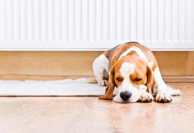 Hond slaapt voor radiator